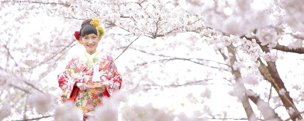 前撮りウェディングフォト 着物 桜
