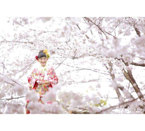 ロケーション撮影フォトウェディング 熊本 桜 二の丸公園